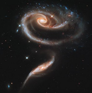 a rose made of galaxies
